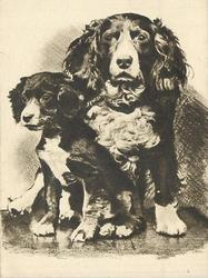 no front title, two spaniels, spaniel puppy left faces & looks part left, adult spaniel right faces front, sepia