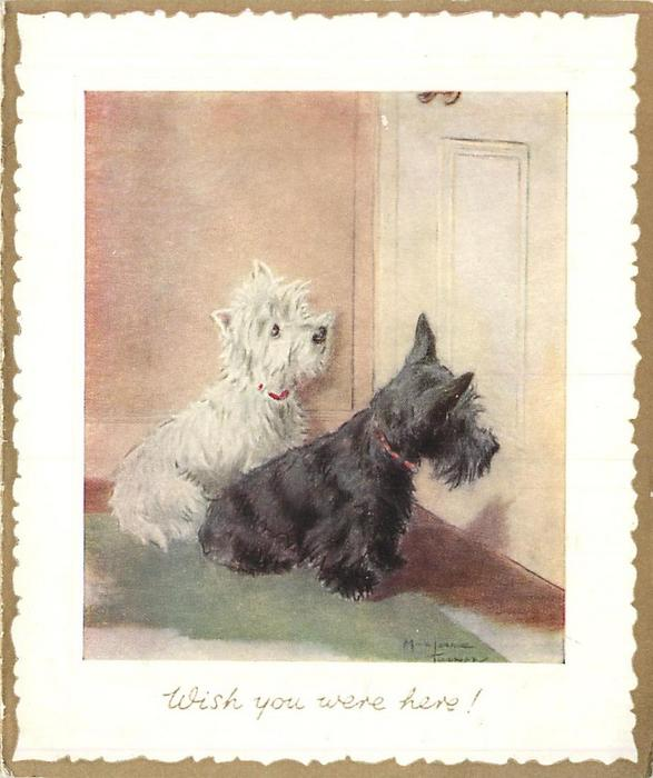 WISH YOU WERE HERE two terriers, one black & one white, sit looking at closed door, white border with gilt trim