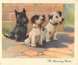 THE HARMONY THREE on lower border, three dogs sit & face part right, centre dog howls