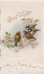 BEST WISHES in gilt above 2 finches & 2 blue-caps perched on clematis, white stylised ivy leaves below