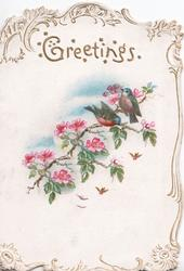 GREETINGS in gilt above pink wild roses, 2 finches perch, gilt marginal design