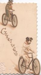 GREETINGS in gilt left 2 terriers bicycle front as humans