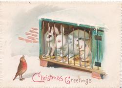CHRISTMAS GREETINGS in red & gilt below, English robin sings to 3 rabbits in a hutch