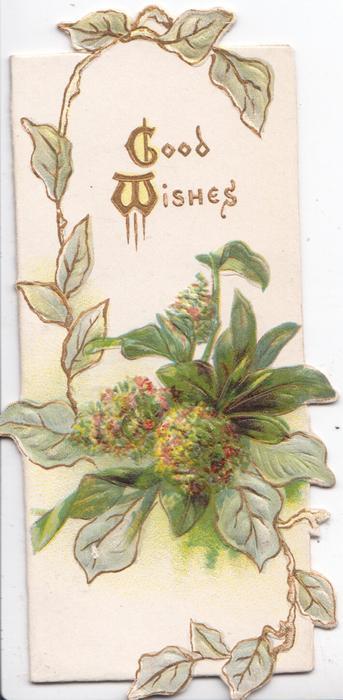 GOOD WISHES(G &W illuminated) above mignonette, white background