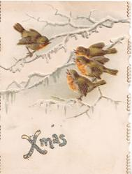 XMAS in glittered silver below 4 robins perched on icy branches