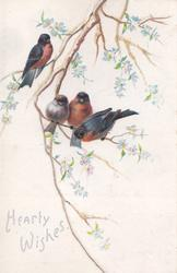 HEARTY WISHES below left under 4 bullfinches perched on branches with pale blue flowers