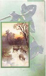 WARM WISHES stylised silver ivy leaves above & right, rural scene, 4 sheep