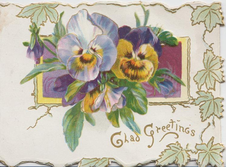 GLAD GREETINGS in gilt below multicoloured pansies over purple plaque, stylised ivy marginal design