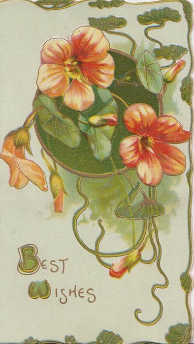 BEST WISHES(B & W illuminated) below orange nasturtiums & green circular design