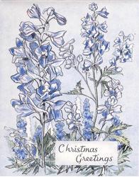 CHRISTMAS GREETINGS inset below blue delphiniums