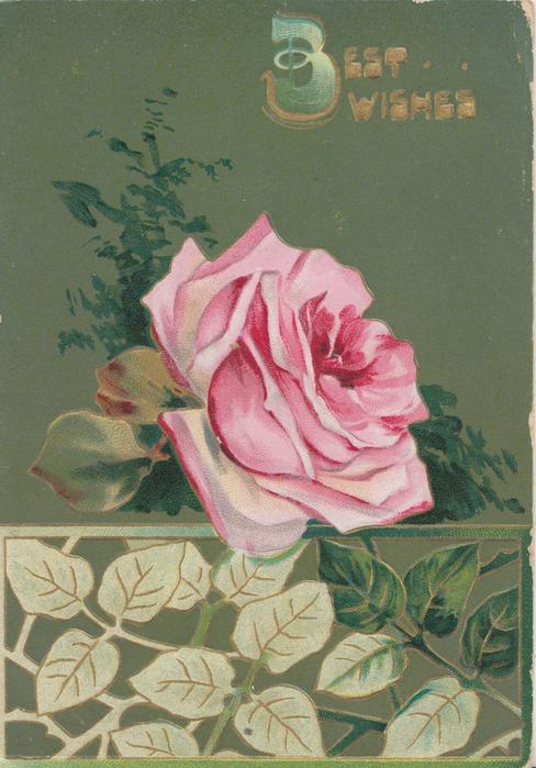 BEST WISHES(B illuminated) in gilt, single pink rose above leafy basal design, deep green background