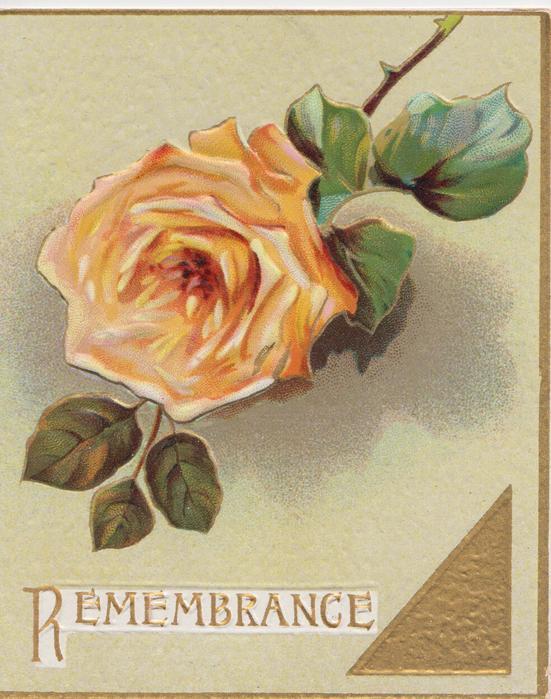 REMEMBRANCE in gilt below single orange rose, gilt design & margins, pale green background