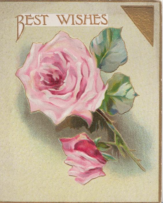 BEST WISHES in gilt above 2 pink roses, gilt design & margins, pale green background