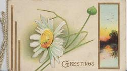 GREETINGS in gilt below white daisy with yellow centre, gilt bordered watery rural inset right