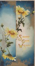 SINCERE GOOD WISHES(S,G &W illuminated) in red, white/yellow daisies set against blue & gilt background, some hidden under flap