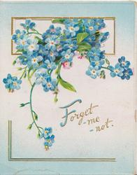 FORGET-ME-NOT(F illuminated), blue forget-me-nots hanging from perforated window, pale blue background