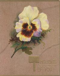THOUGHTS OF YOU(T illuminated) below white/purple pansies, brown background, 3 gilt margins