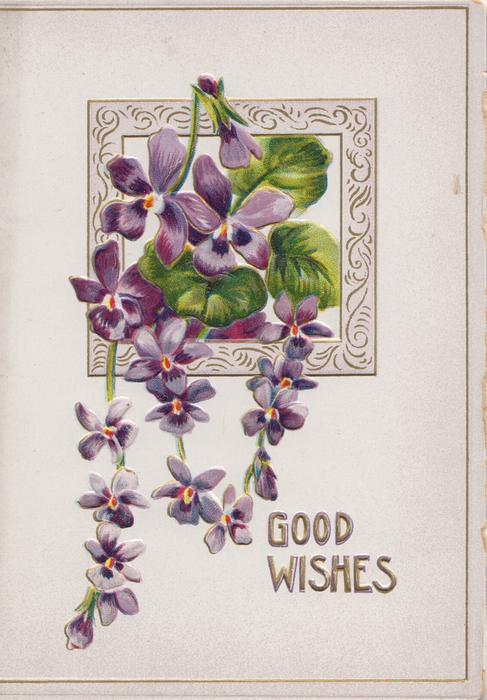 GOOD WISHES in gilt below violets hanging from top of square pale purple design
