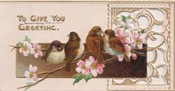 TO GIVE YOU GREETING 4 birds of happiness perched on pink/white wild roses, perforated white design right
