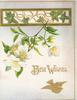 BEST WISHES(B & W illuminated) above bird & below white wild roses & ivy leaves coming through window