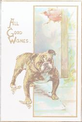 ALL GOOD WISHES, bulldog in front street scene