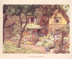 A COTTAGE GARDEN  cottage with flowers, path dividing two trees & water pump front