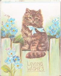 LOVING WISHES, cat wearing ribbon perched on fence beside flowers