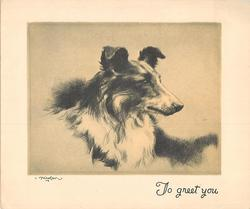 TO GREET YOU head & shoulders sketch of collie facing right, yellow/grey background