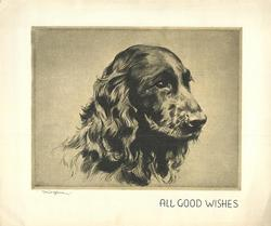 ALL GOOD WISHES head of spaniel looking right