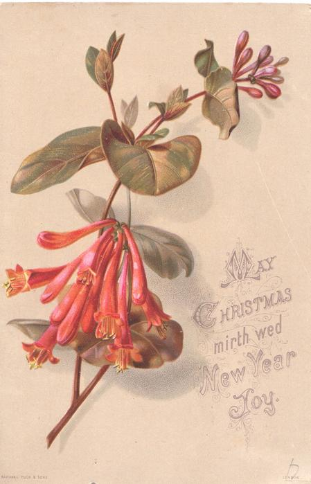MAY CHRISTMAS MIRTH WED NEW YEAR JOY spray of pink fuchsia