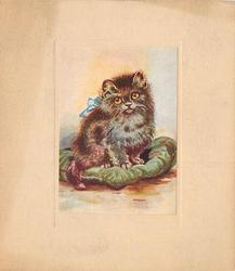 no front title, grey cat wearing blue bow sits on green cushion  facing front