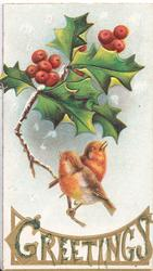 GREETINGS in gilt below 2 robins perched below berried holly