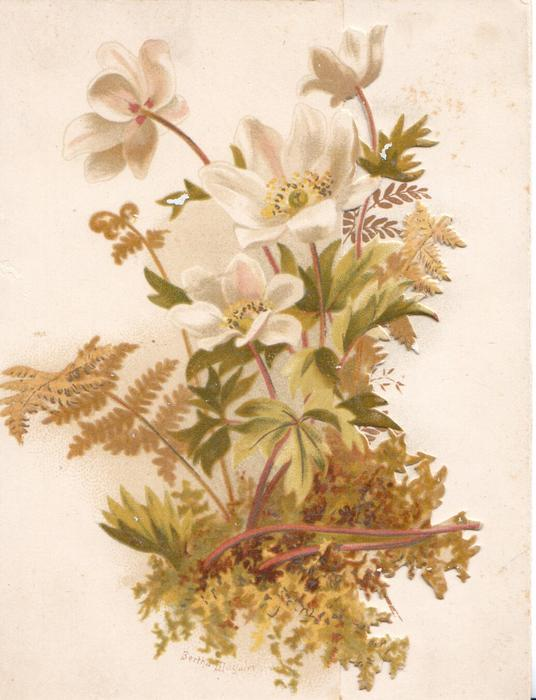 no front title, white anemones & fern on left front flap, more on back of card above Tuck info.