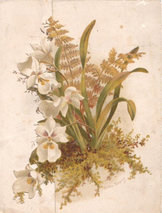 no front title, snowdrops & fern on right front flap, more on back of card above Tuck info.