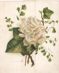 no front title, ivy , geiko leaves & white camellia, ivy also on back