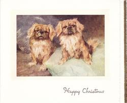 HAPPY CHRISTMAS in gilt, two pekingese dogs face front, dog, right, sits on green pillow, cream & white borders