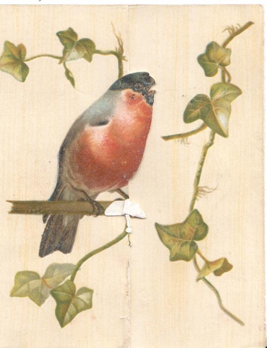 no front title, bullfinch perched among ivy  more ivy on back of card above Tuck info.