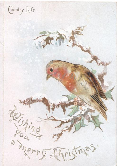 COUNTRY LIFE  WISHING YOU A MERRY CHRISTMAS robin perched, head & breast seen through large perforation