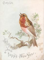 COUNTRY LIFE  WISHING YOU A HAPPY NEW YEAR robin perched, head & breast seen through large perforation