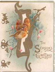 THE SEASON'S GREETINGS in gilt, 3 robins perch on sparse blossom branch over complex gilt bordered design