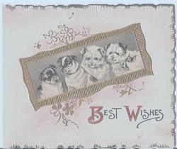 BEST WISHES gilt inset with four young dogs