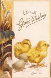 WITH ALL GOOD WISHES in gilt, 3 chicks look right, brown floral design left, JUST OUT below