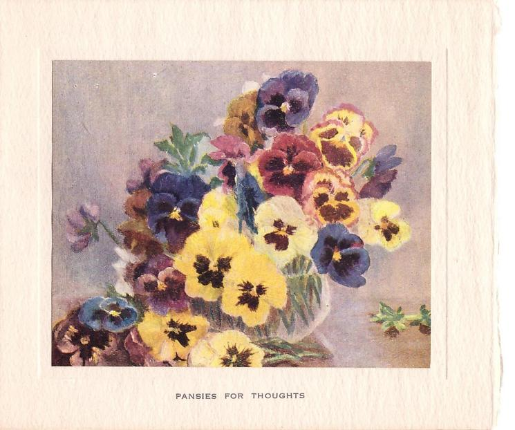 PANSIES FOR THOUGHTS many colours of pansies in shallow glass vase