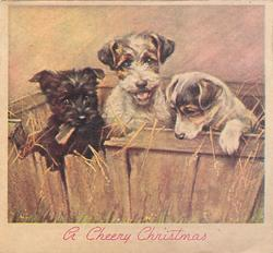 A CHEERY CHRISTMAS in red below 3 puppies in wooden box