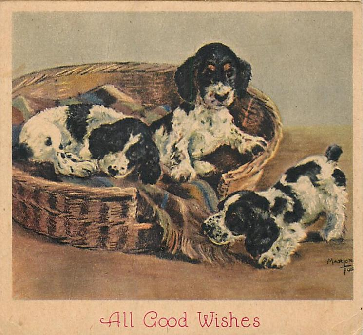ALL GOOD WISHES two spaniel puppies in basket and another beside