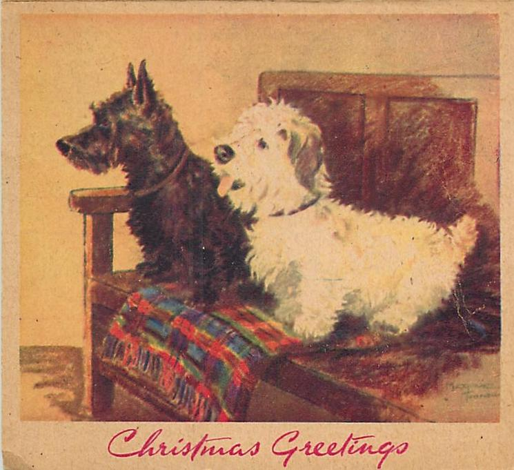 CHRISTMAS GREETINGS two terriers, one black & one white face left, standing on wooden bench