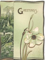 GREETINGS over narcissus, pale green background, part of rural scene on inside back visible
