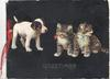 GREETINGS in gilt below puppy & 2 crying kittens, black background