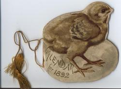 THE NEW BORN CALENDAR FOR 1892 chick by egg (full title on first page)