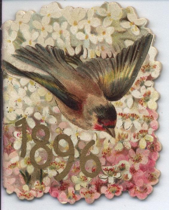 1896 bird in flight